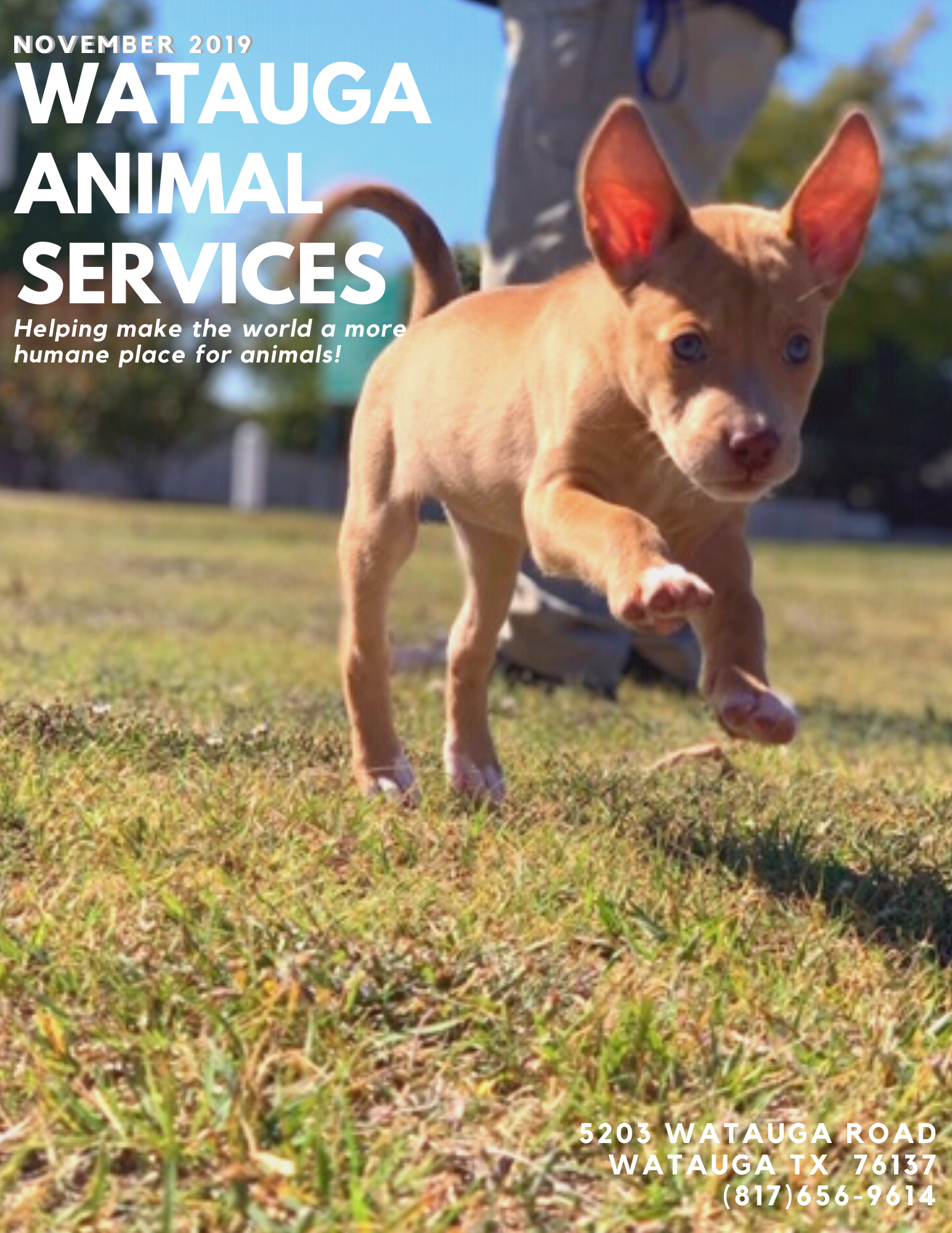 Watauga Animal Services NOVEMBER 2019 Front Page