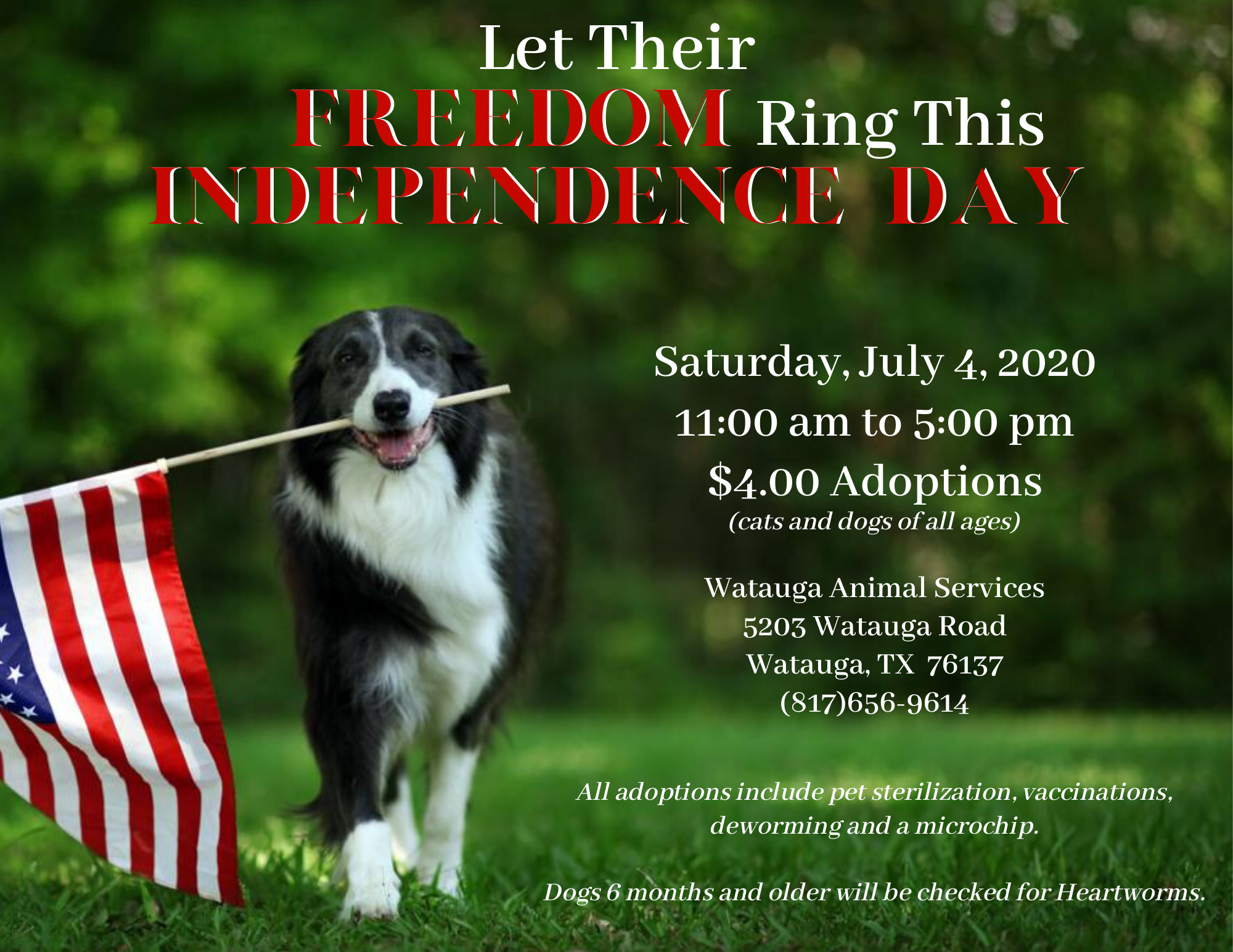 Let Their Freedom Ring - July 4th Adoption Promo