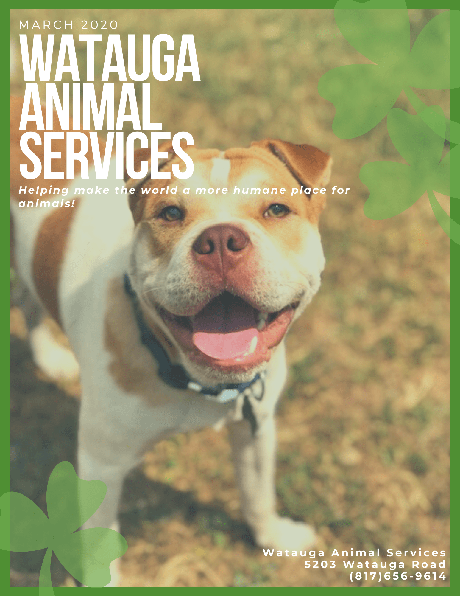 Watauga Animal Services (44)