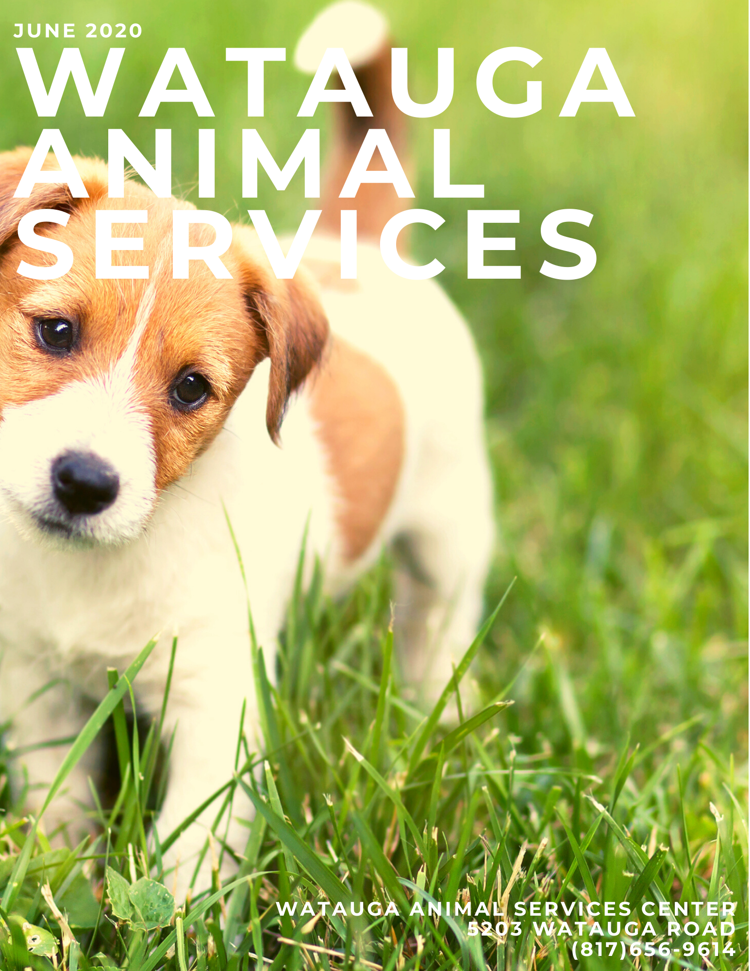 watauga animal services (56)