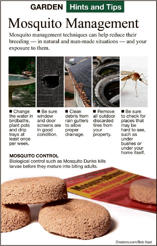 Hints and Tips - Mosquito Management - Keller Citizen News Article